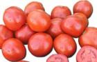 Сорт томата: Вулкан f1