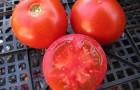 Сорт томата: Выскочка
