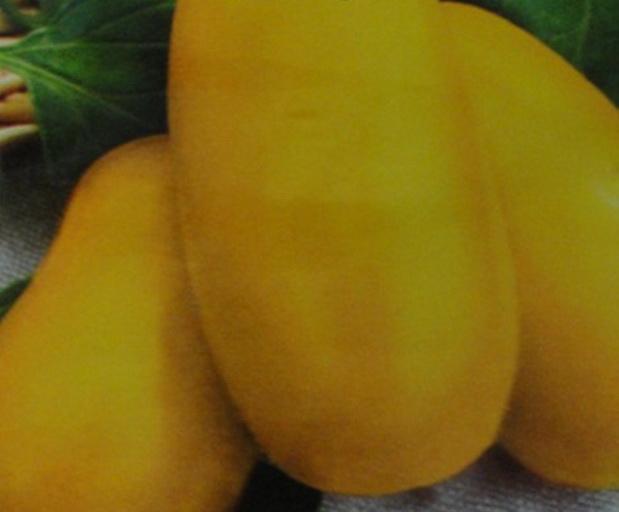 Сорт томата: Желтая ракета