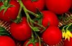 Сорт томата: Жемчужина красная