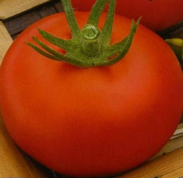 Сорт томата: Журавлик