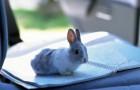 Заболевания кроликов – Кокцидиоз