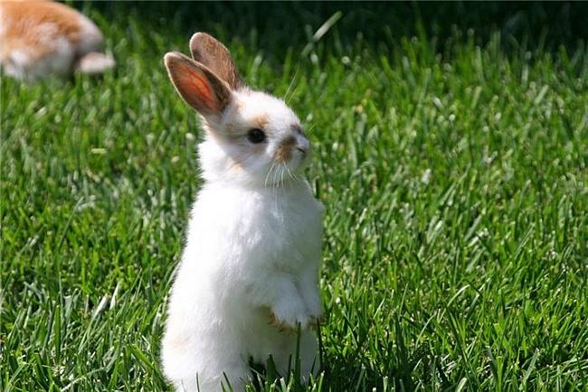 Заболевания кроликов – Колибактериоз