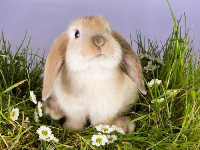 Заболевания кроликов – Листериоз