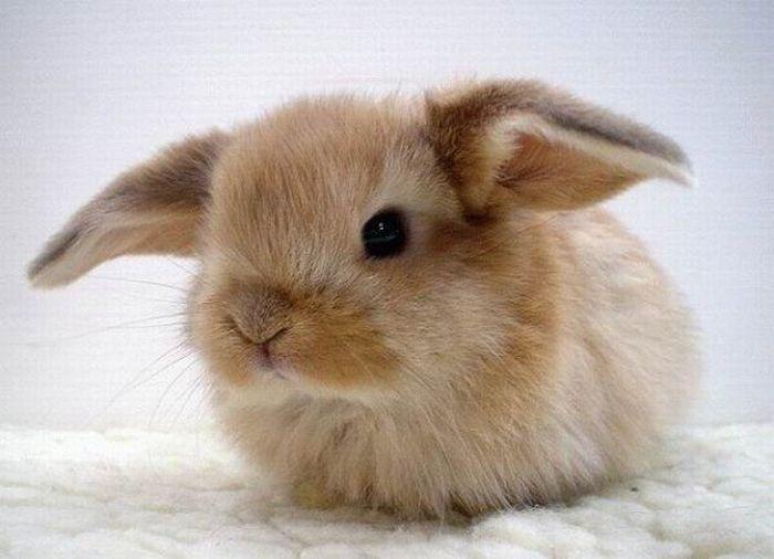 Заболевания кроликов – Пассалуроз
