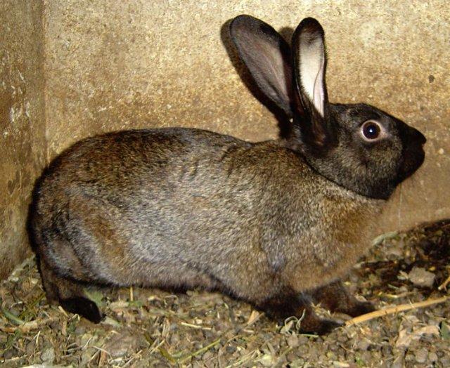 Заболевания кроликов – Стригущий лишай