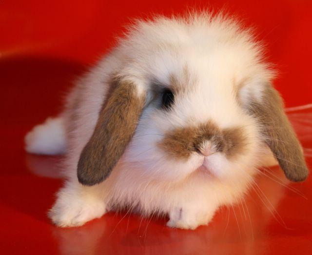 Заболевания кроликов – Цистит