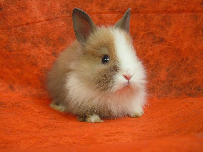 Заболевания кроликов – Везикулярный стоматит