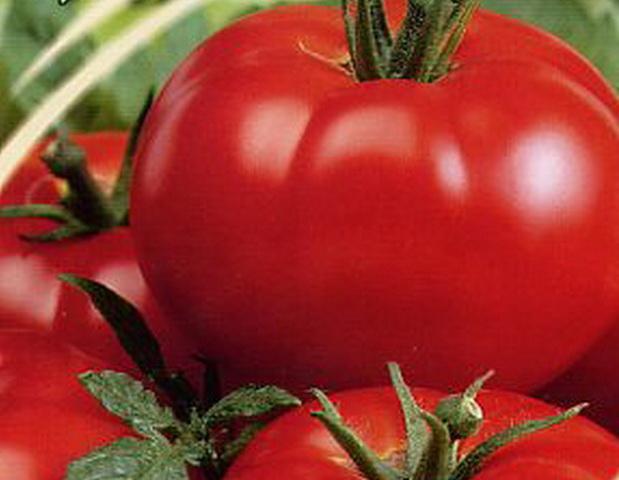 Сорт томата: Заряна   f1