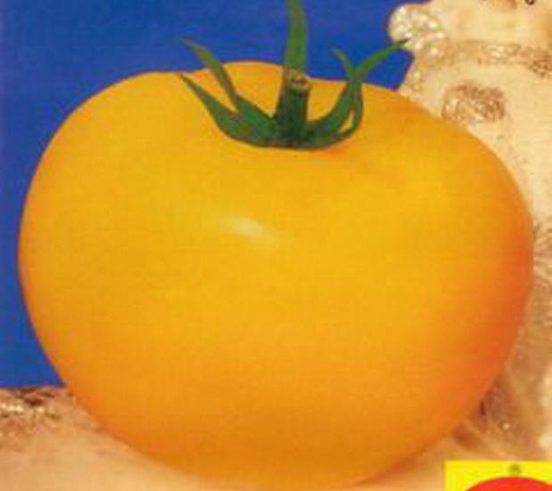 Сорт томата: Злато