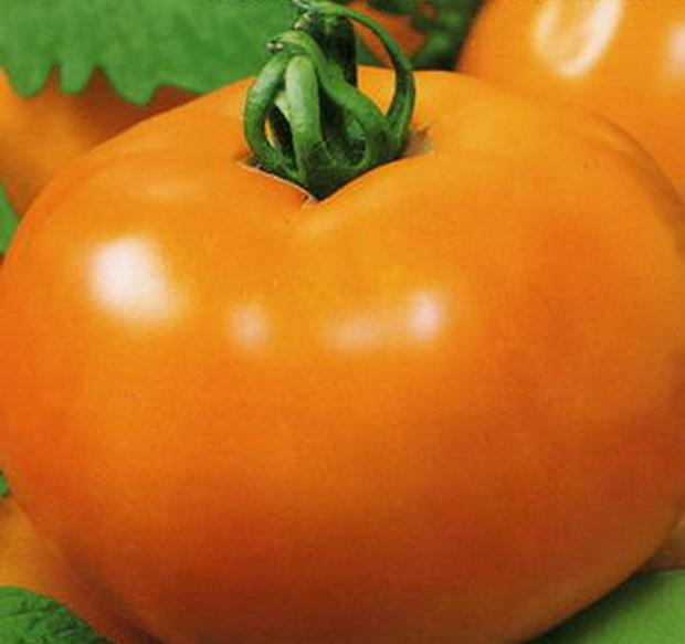 Сорт томата: Золотая андромеда   f1