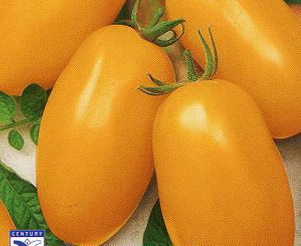 Сорт томата: Золотая пуля