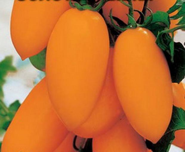 Сорт томата: Золотая рыбка