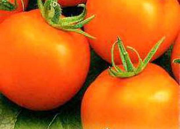 Сорт томата: Золотничок