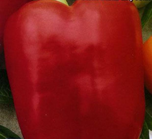 Сорт перца сладкого: Агаповский