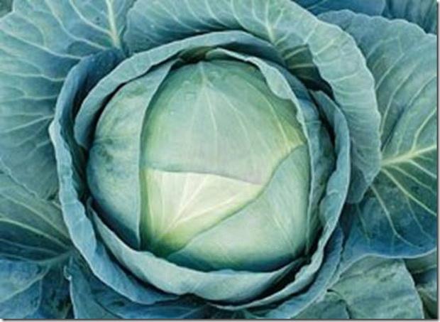Сорт капусты белокочанной: Агрессор   f1