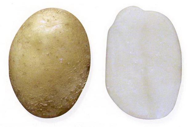 Сорт картофеля: Акросия