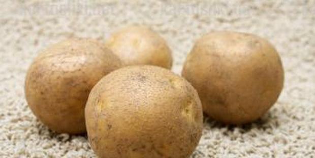 Сорт картофеля: Алова