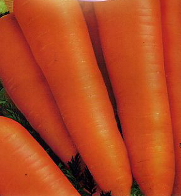 Сорт моркови: Алтаир   f1