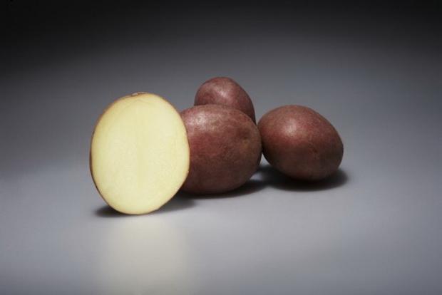 Сорт картофеля: Альвара