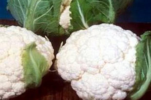 Сорт капусты цветной: Арфак   f1
