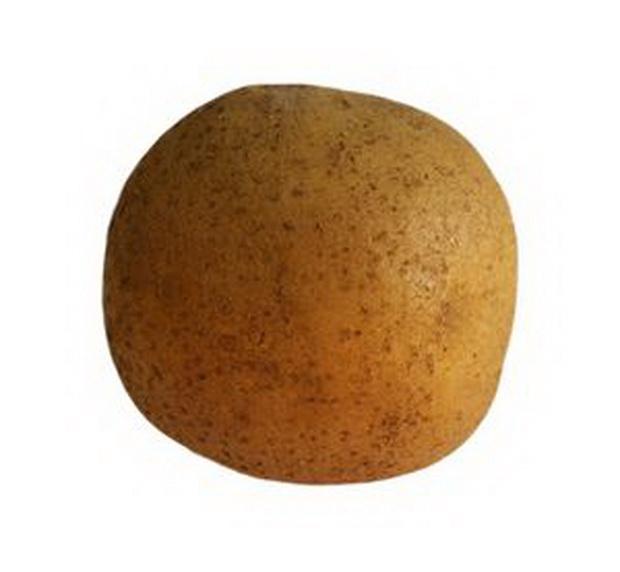 Сорт картофеля: Архидея