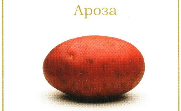 Сорт картофеля: Ароза