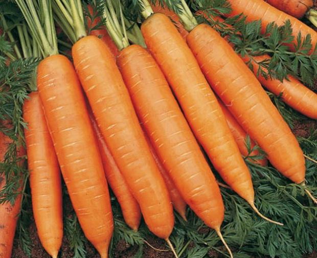Сорт моркови: Бангор   f1