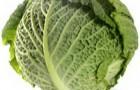 Сорт капусты белокочанной: Баронесса f1