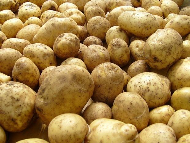 Сорт картофеля: Башкирский