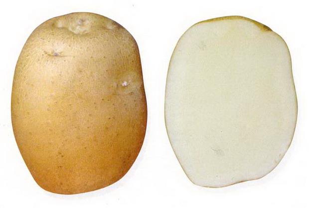 Сорт картофеля: Батя