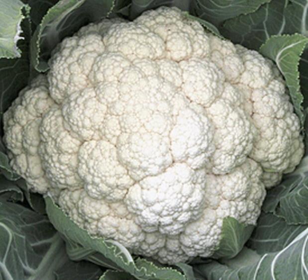 Сорт капусты цветной: Белая головушка