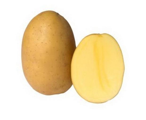 Сорт картофеля: Беллаприма