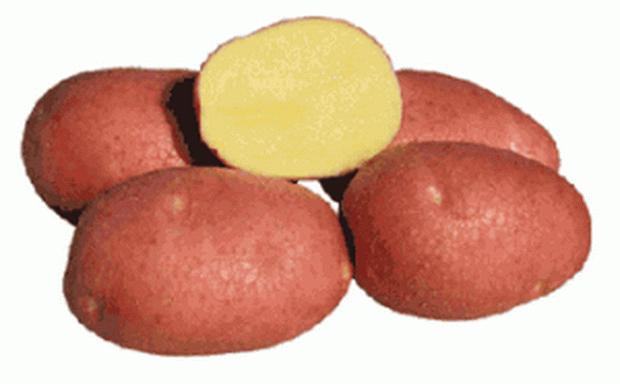 Сорт картофеля: Беллароза