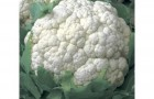 Сорт капусты цветной: Бермуда f1