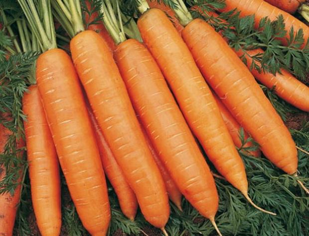 Сорт моркови: Берски   f1