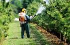 Биокультуры против вредителей: чего добилась наука