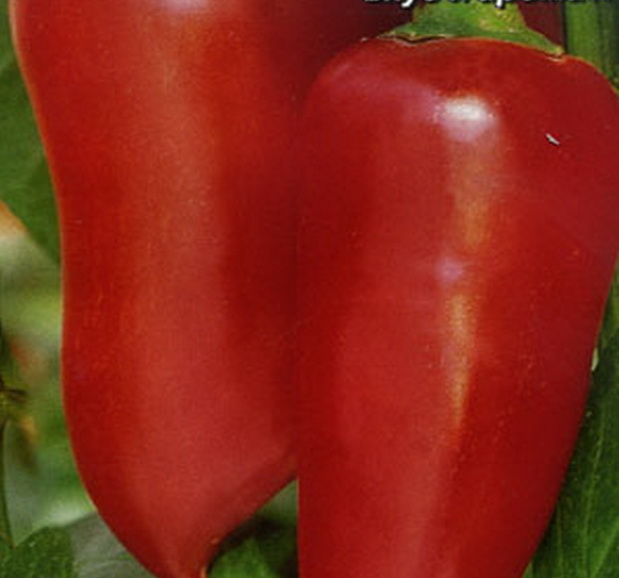 Сорт перца сладкого: Болгарец