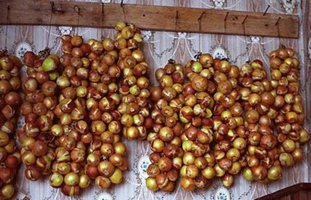 Сорт лука репчатого: Боярин   f1