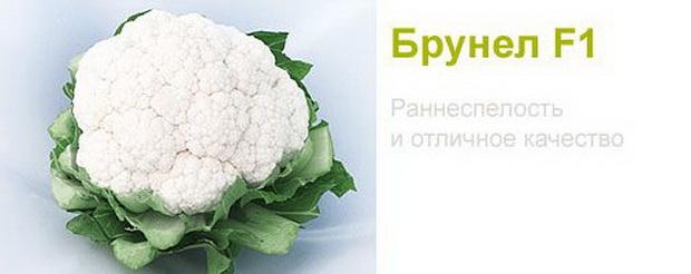 Сорт капусты цветной: Брунел   f1