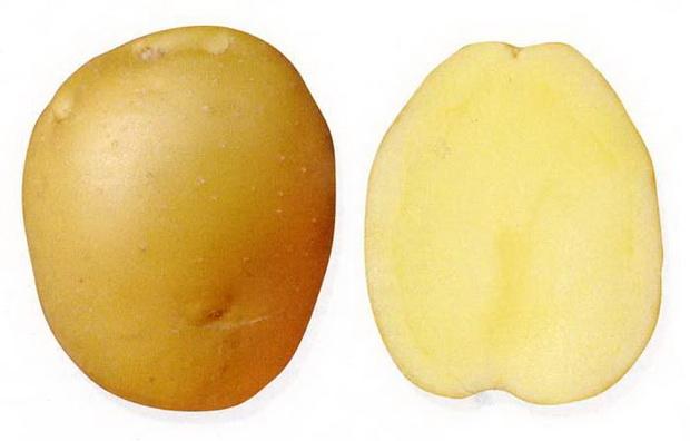 Сорт картофеля: Брянский деликатес