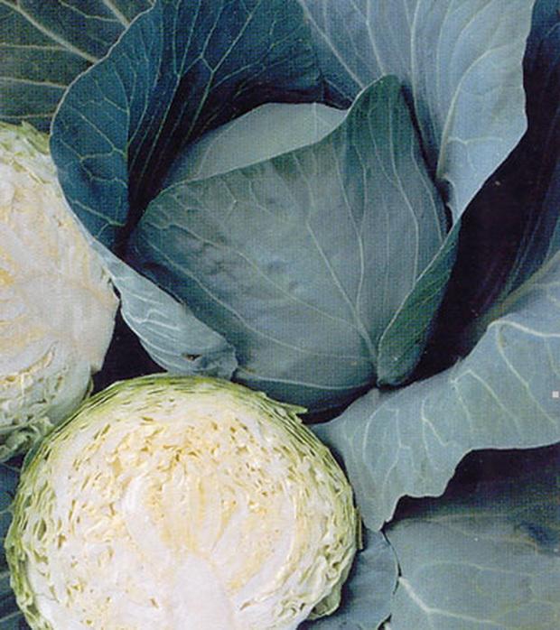 Сорт капусты белокочанной: Бухарест   f1