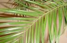 Букет с листьями финиковой пальмы