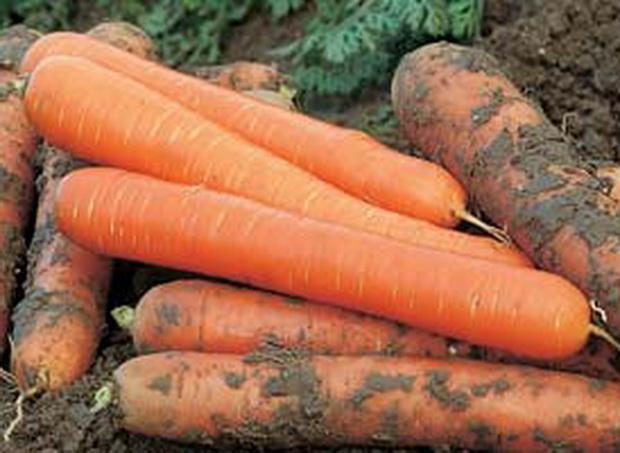 Сорт моркови: Чемпион   f1