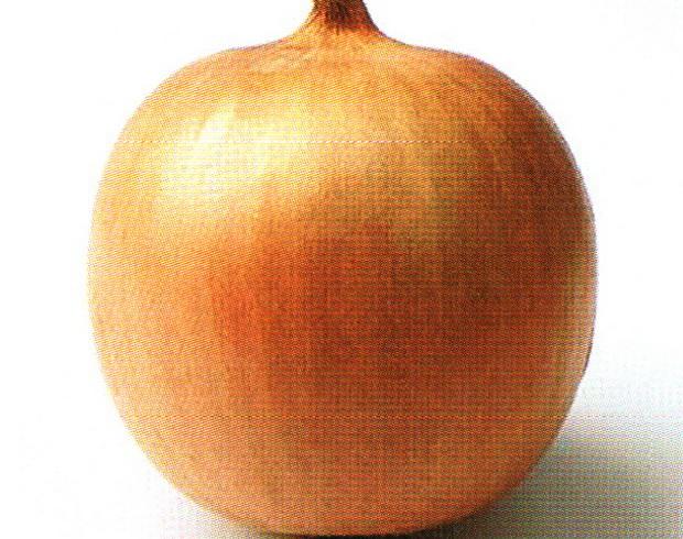 Сорт лука репчатого: Дакапо   f1
