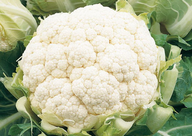 Сорт капусты цветной: Далтон   f1