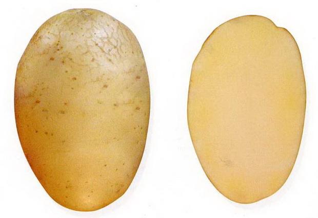 Сорт картофеля: Даренка