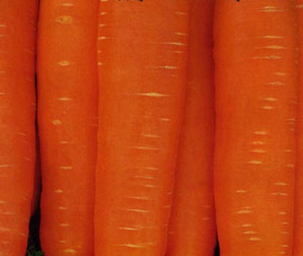 Сорт моркови: Дарина