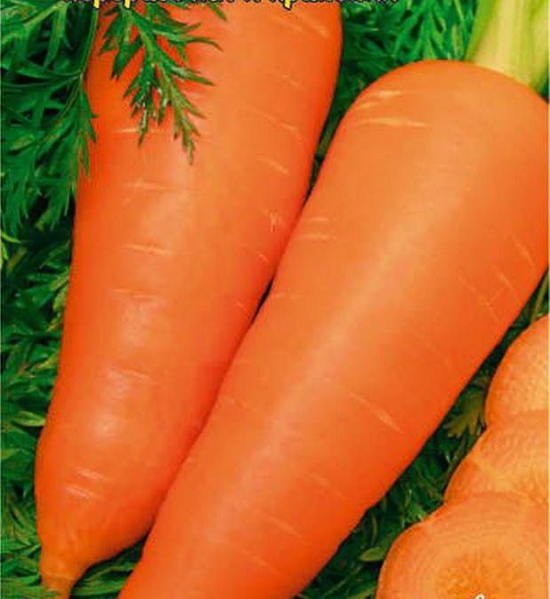 Сорт моркови: Даяна