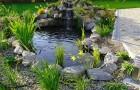 Декоративные пруды в саду